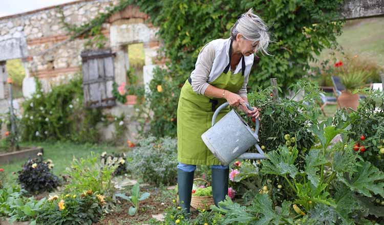 mature lady watering plants with a watering can