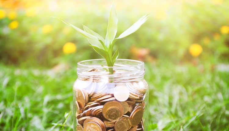 pennies in a jar with a green shoot growing from the top