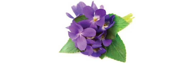 a simple buttonhole of purple pansies to represent loving thoughts