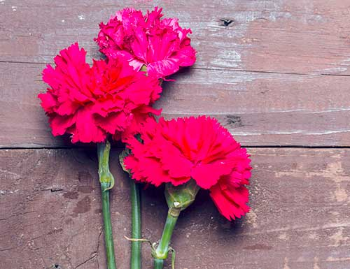 carnations for funerals