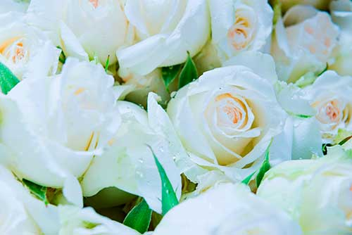 white roses for a funeral