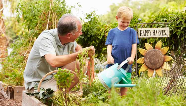 grandfather and grandson watering vegetable garden