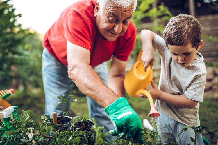 Grandfather working in garden with grandson